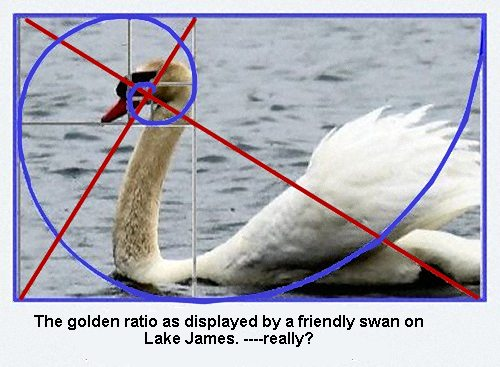 swan with golden ratio